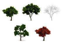 Satz der Bäume 3d. Stockbilder