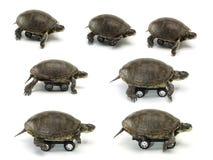 Satz der beweglichen Schildkröte Stockfotografie