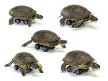 Satz der beweglichen Schildkröte Lizenzfreies Stockfoto
