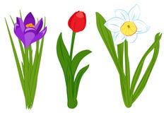 Satz der blauen Narzisse, des purpurroten Krokusses und der roten Tulpe blüht Flache Illustration lokalisiert auf weißem Hintergr Lizenzfreie Stockbilder