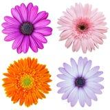 Satz der bunten Blume lokalisiert auf Weiß Lizenzfreies Stockfoto