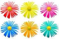 Satz der farbigen exotischen Chrysantheme blüht Makro lokalisiert Stockfoto