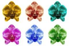 Satz der farbigen exotischen Iris blüht Makro lokalisiert Stockfoto