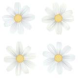 Satz der lokalisierten, weißen Kamille, Gänseblümchen Vektorblumen auf weißem Hintergrund Schablone für für T-Shirt, Mode, druckt Stockfotos