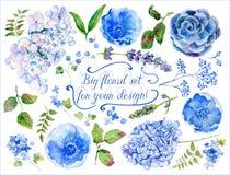 Satz der unterschiedlichen blauen, cyan-blauen Hortensie, Lavendel, Korinthe für DES Stockbilder