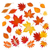Satz der unterschiedlichen Herbstlaubvektorillustration Stockfotografie