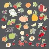 Satz der Vektorillustration der Früchte und der Beeren Lizenzfreies Stockfoto