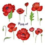 Satz der verschiedenen Mohnblume Rote Blumensammlung Bunte Hand gezeichnete Illustration Stockfoto