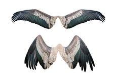Satz des Flügels Stockbild