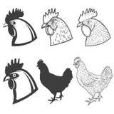 Satz des Huhns geht die Ikonen voran, die auf weißem Hintergrund lokalisiert werden Entwurf Stockbilder