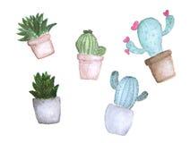 Satz des Kaktus im tropischen Garten des Topfes Stockfotografie