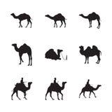Satz des Kamel-Schattenbildes Lizenzfreie Stockfotografie