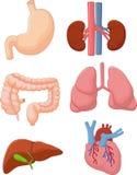 Satz des Karikatur-inneren Organs Stockfotos