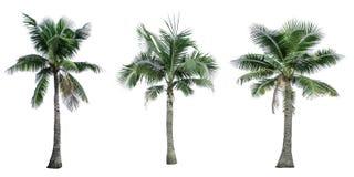 Satz des Kokosnussbaums benutzt für die Werbung der dekorativen Architektur Sommer und Strandkonzept stockfotografie