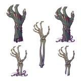 Satz des lebensechten dargestellten Verrottungszombiehand- und -Skeletthandsteigens lizenzfreie abbildung