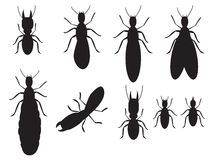 Satz des Schwarzen silhouettiert Termiten Lizenzfreies Stockfoto