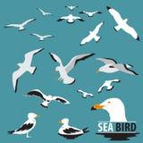 Satz des Seevogels und der Seemöwe Stockbild