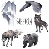 Satz des Sibiriers Elche, Wolf, Mond und Adler Getrennt auf weißem Hintergrund Lizenzfreie Stockfotos