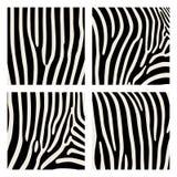 Satz des Tiermusters Nachgemachter Druck der Haut des Zebras Schwarze Streifen auf grauem Hintergrund stock abbildung