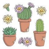 Satz des Vektors färbte Kaktus mit Blumen in den alten Töpfen Stockfoto