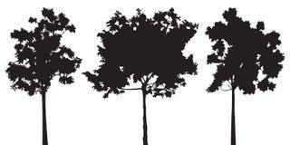 Satz des Vektorschattenbildes mit drei Bäumen Stockfoto