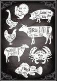 Satz Diagramme von Abschnitten von unterschiedlichen Tieren und von Meeresfrüchten Lizenzfreie Stockfotografie
