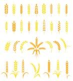 Satz einfache und stilvolle Weizenähreikonen Lizenzfreies Stockfoto
