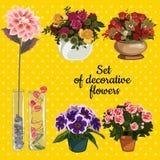 Satz eingemachte Blumen auf einem gelben Hintergrund stock abbildung