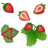 Satz Erdbeerfrüchte und Grünblätter lokalisiert auf Weißrückseite Lizenzfreie Stockfotografie