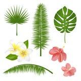 Satz exotische tropische Blumen, Anlagen, Blätter Vector Illustration mit realistischer Palme, Blatt, Hibiscus, Plumeria Lizenzfreie Stockfotografie