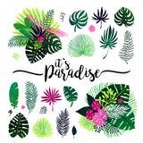 Satz exotischer Blumenstrauß, tropische Anlagen, Palmblätter und Blumen auf einem weißen Hintergrund Botanische Illustration des  Lizenzfreie Stockfotografie