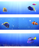 Satz Fahnen mit tropischen Fischen Stockbild