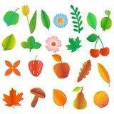 Satz farbige Früchte, Blumen Beeren, Blätter und Pilze Stockbild