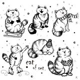 Satz festliche Katzen Lizenzfreie Stockfotos