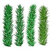 Satz Fichten- und Tannenbaumaste - Weihnachtselemente vektor abbildung