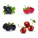 Satz Früchte - schwarze Johannisbeere, Himbeere, Brombeere und Kirsche lizenzfreie abbildung