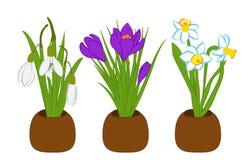 Satz Frühlingsschneeglöckchen, Narzisse und Krokusblumensträuße in den Blumentöpfen lokalisiert auf Weiß Auch im corel abgehobene Stockfotografie