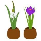 Satz Frühlingsschneeglöckchen und -krokus im Blumentopf lokalisiert auf Weiß Auch im corel abgehobenen Betrag lizenzfreie abbildung