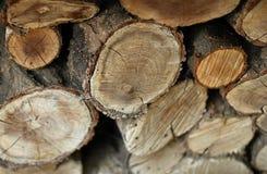 Satz gefällte Bäume Lizenzfreie Stockfotografie