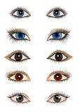 Satz geöffnetes weibliches Auge isoliert Stockbild