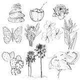 Satz Gekritzelskizzenstrelitzia, -Plumeria, -lotos, -elefant, -palme, -kokosnuß, -kaktus, -schmetterlinge und -Muscheln Vektor Stockbild