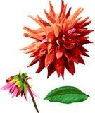 Satz Georgina-Blume und Blätter 2 Stockfotografie