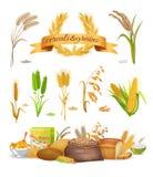 Satz Getreide und Körner auf weißem Hintergrund lizenzfreie abbildung
