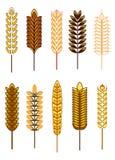 Satz Getreideohren stock abbildung