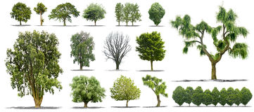 Satz getrennte Bäume auf einem weißen Hintergrund Stockbilder
