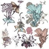 Satz gezeichnete Blumen des Vektors Hand Stockbild
