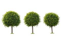 Satz grüne Bäume lokalisiert auf Weiß Stockbilder