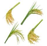 Satz grüner ungeschälte Reis lokalisiert auf Weiß lizenzfreie stockfotografie