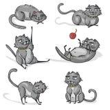 Satz graue Karikaturkatzen Katzenspiel, Schlaf, Lage Lizenzfreie Stockfotografie