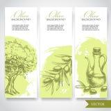 Satz Hand gezeichnete olivgrüne Fahnen Oliven, Olivenbaum und Ölzweig Lizenzfreies Stockbild